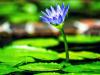 ¿Qué son las plantas policárpicas?