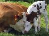 Bienestar animal versus maltrato animal