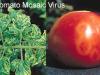¿Qué es la virosis y cómo afecta a las plantas?
