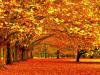 Por que se caen las hojas en otoño?