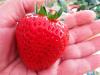 Aumentan el tamaño de hortalizas y frutas de forma natural