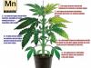 La funcion del manganeso en el cultivo de plantas