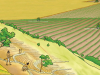 Historia de la agricultura Parte 2/10
