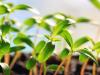 El rol de los nutrientes en la resistencia a enfermedades de las plantas