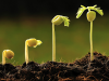Descubren mecanismos de la «vision» de las plantas