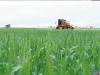 Fungicidas, la clave para lograr los mejores resultados en trigo