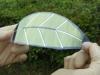 «Hoja artificial» podria ser la fuente mas limpia y eficiente en energia renovable en el planeta