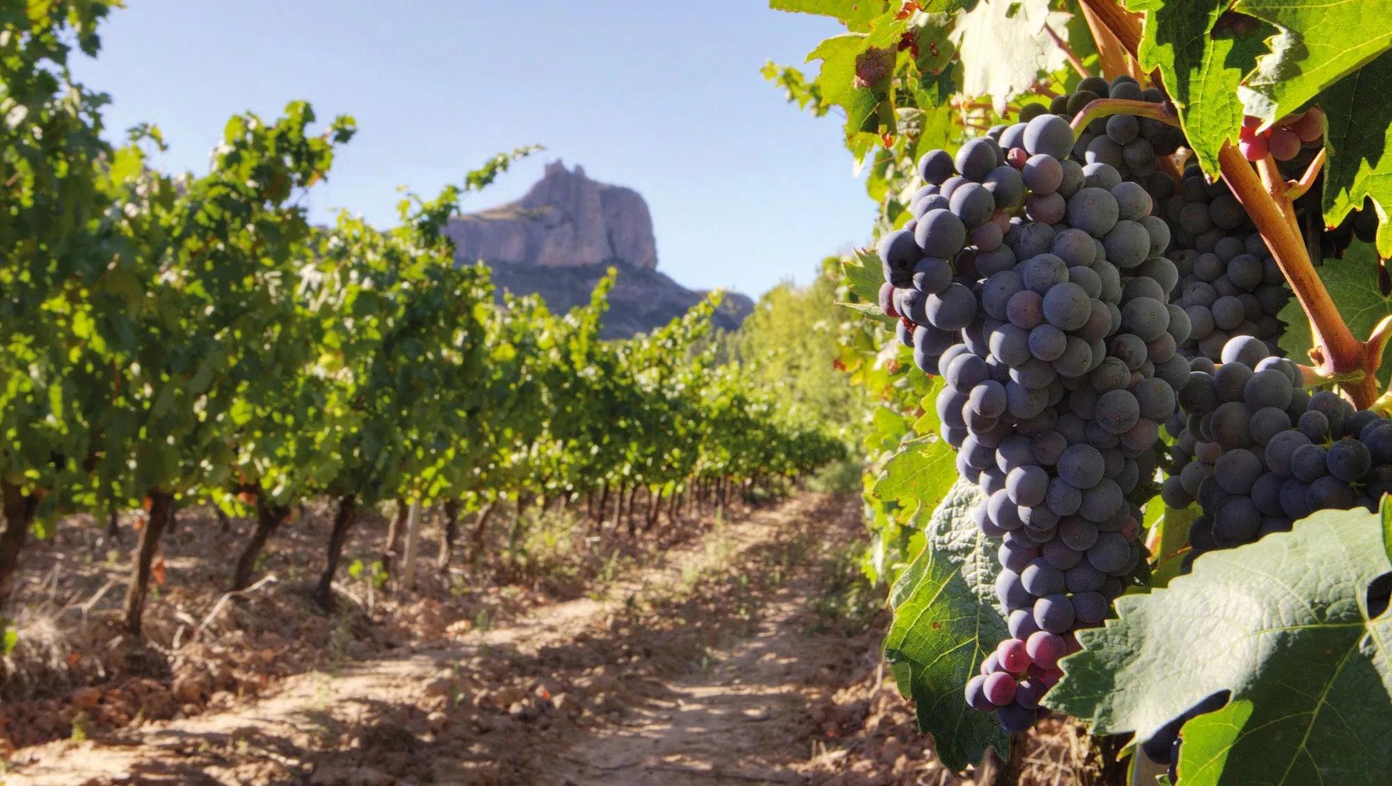 """""""Nubes"""" virtuales para proteger los viñedos"""