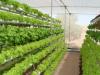 10 claves para construir un invernadero hidroponico