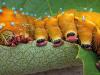 ¿Cómo controlar plagas y enfermedades? Lo biológico frente a lo químico