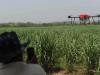 USO DE DRONES EN EL CULTIVO DE LA CAÑA DE AZÚCAR
