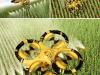 Drones Agrícolas para cultivos más rentables