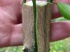 ¿Qué es el injerto en plantas?
