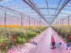 Iluminación LED para cultivos de horticultura