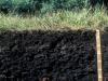 La materia orgánica. Su importancia en el suelo