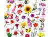 Clasificacion de las flores: Ejemplos y características