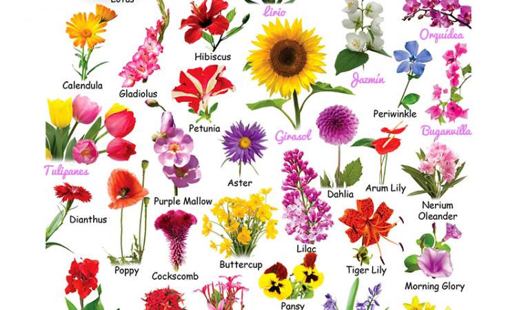 clasificacion de las flores