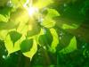 Etapas de la fotosintesis