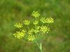 ¿Qué son las inflorescencias?