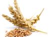 Estructura y Morfologia de los Cereales