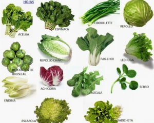 hortalizas de hojas