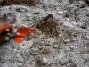Cómo calcular la dosis de yeso en un suelo con problemas de sodio