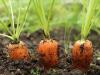 Que hortalizas se pueden cultivar durante todo el año