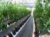 Produccion sustentable de hortalizas en invernaderos