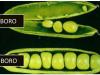 Rol del boro en el cultivo de plantas
