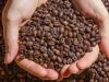 Cambio climático: ¿Una amenaza para el cultivo del café?