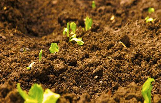 Importancia de la materia organica en la agricultura y en cultivos agricolas
