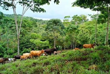 Ganaderia forestales aumenta rentabilidad negocio ganadero