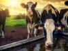 Agua: las sales que afectan el consumo para la ganadería
