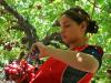 Cual es el papel de la mujer en la agricultura y el desarrollo