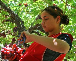 Papel de la mujer en la agricultura y el desarrollo agricola enfoque de genero agricultura