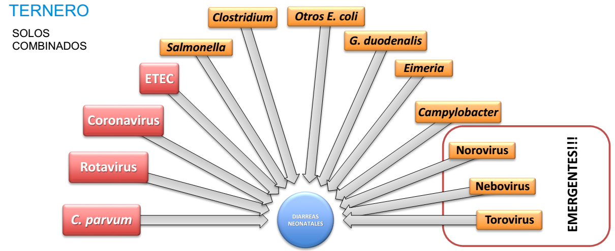 Principales enteropatógenos relacionados con la diarrea del ternero