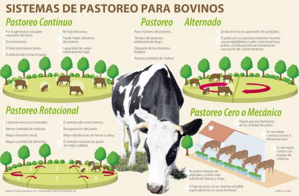 Que es el Pastoreo Racional Voisin Ganaderia bovina produccion animal fincas ganaderas