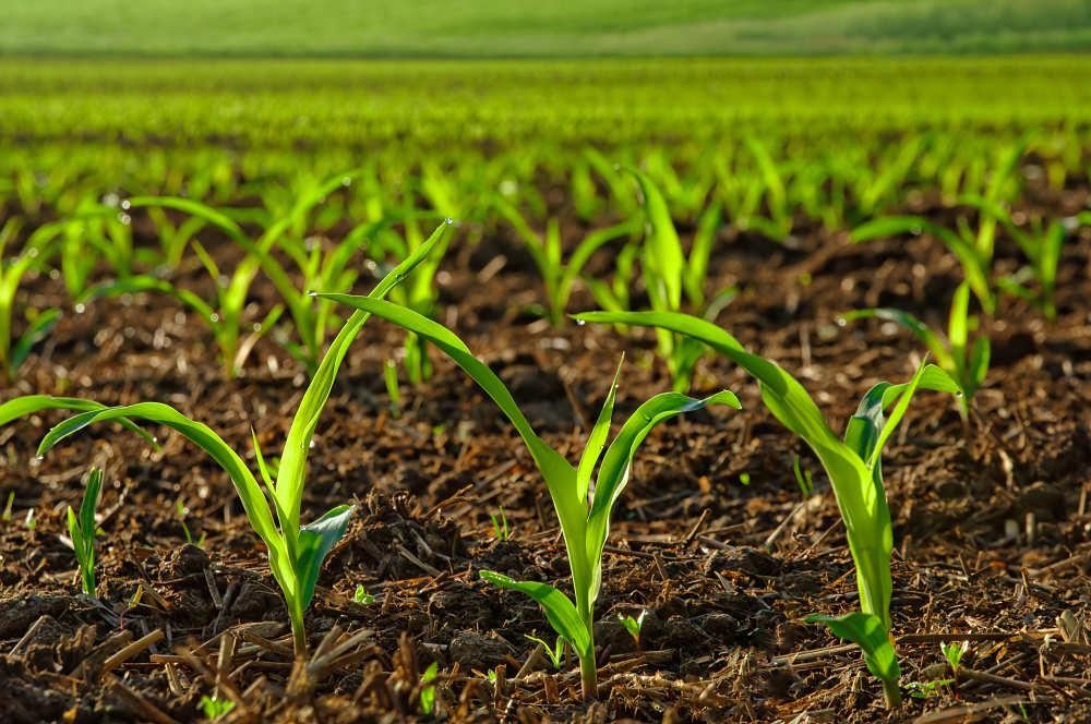Que es un herbicida sistemico